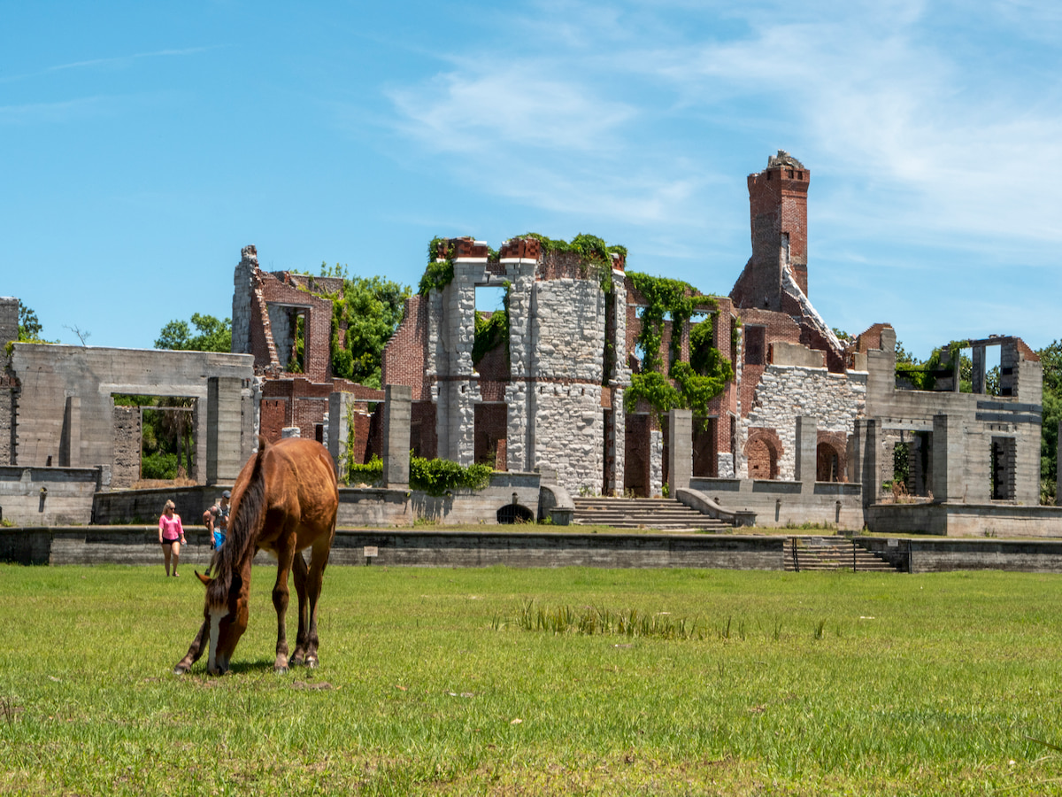 Wild horses at Dungeness Ruins on Cumberland Island